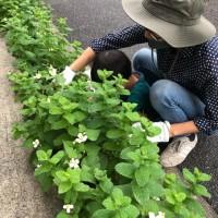 COS下北沢 植栽を剪定しました